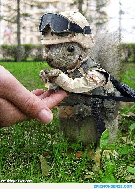 Furry Soldier