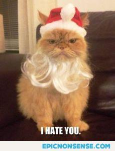 Grouch Santa Cat