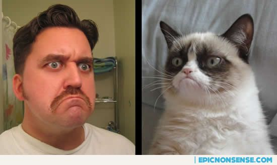 Tard the Grouchy Cat