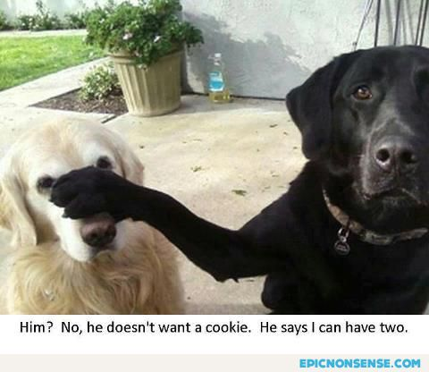 cute cookie dogs