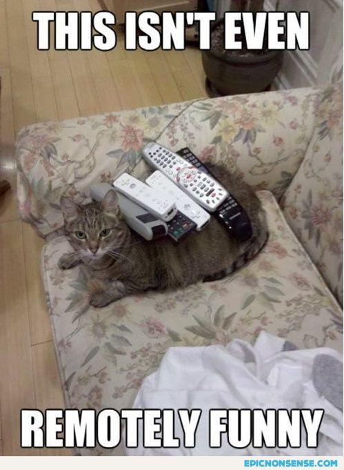 Cat is displeased