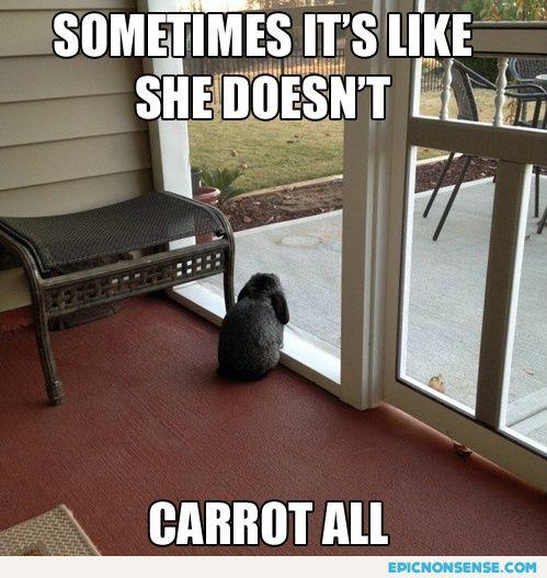 Melancholic rabbit