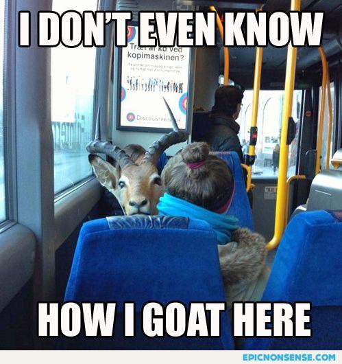 How I Goat Here