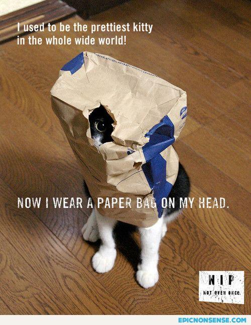 Nonsense Cat