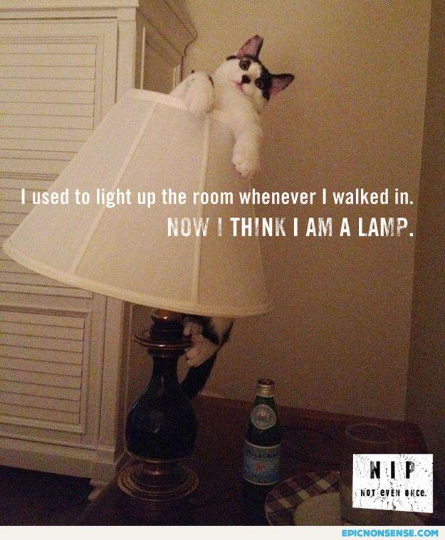 I'm A Lamp
