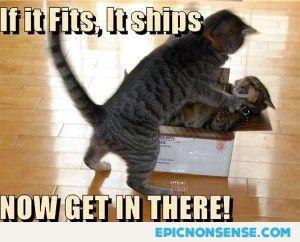 If It Fits, It Ships