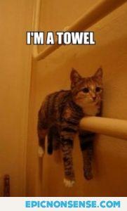 I'm A Towel