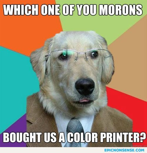 Color Blind Dog