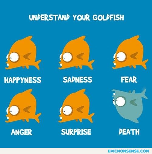 Goldfish Body Language