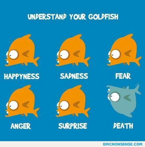 Goldfish Body Language