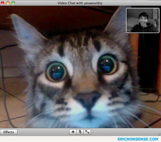 Cat's Face Seeing Its Owner On Webcam