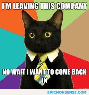 Office Cat