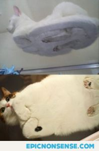 Cats Seen From Below