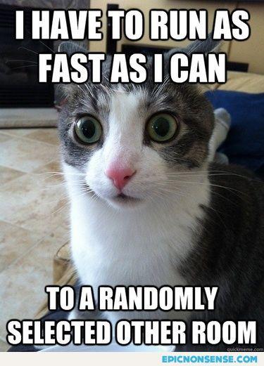 Cat's Logic