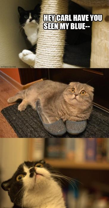 Cat Nonsense