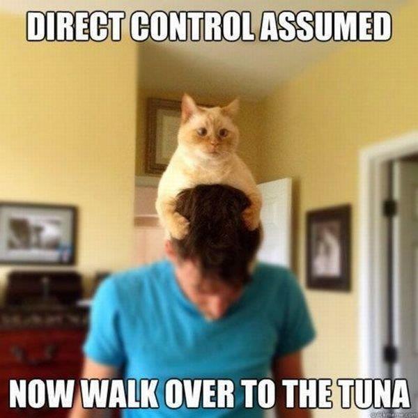 A Cat's Sci-Fi Dream