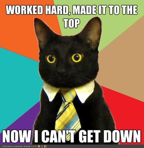 Office Cat's Hard Work