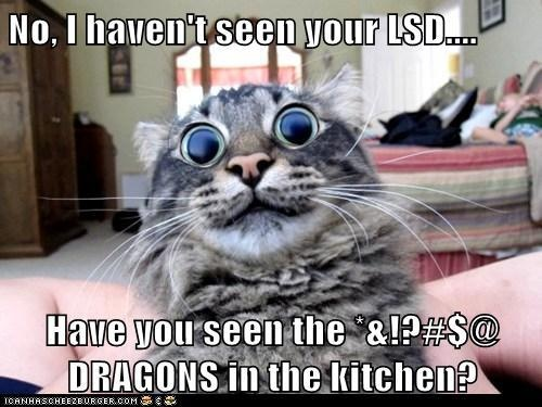 Have You Seen My LSD?
