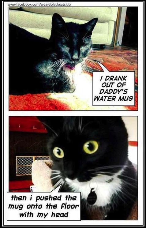 cat shame 1