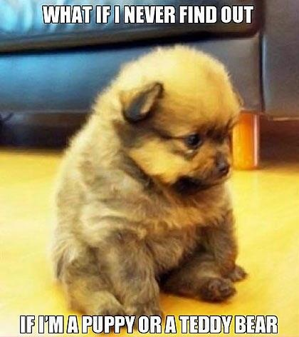 Puppy's Thoughts