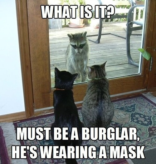 Must Be A Burglar