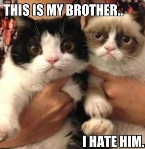 Grumpy Bros