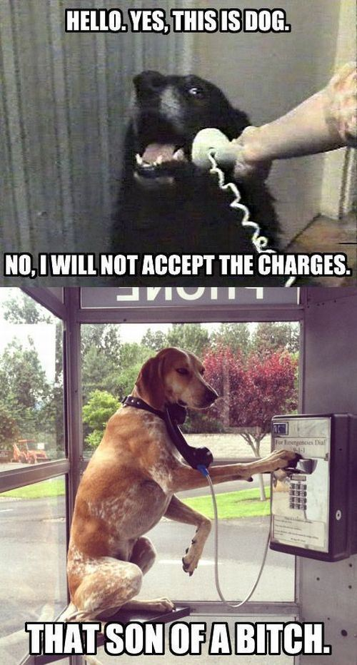 Telephone Dogs