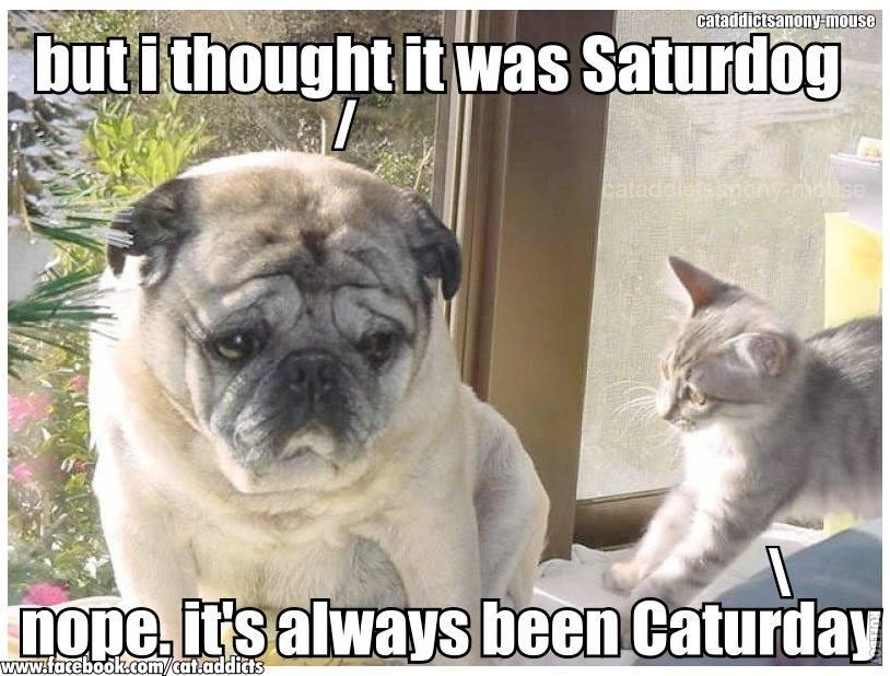 Saturdog vs Caturday