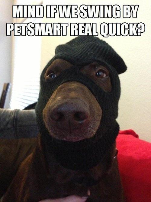 Dog Burglar