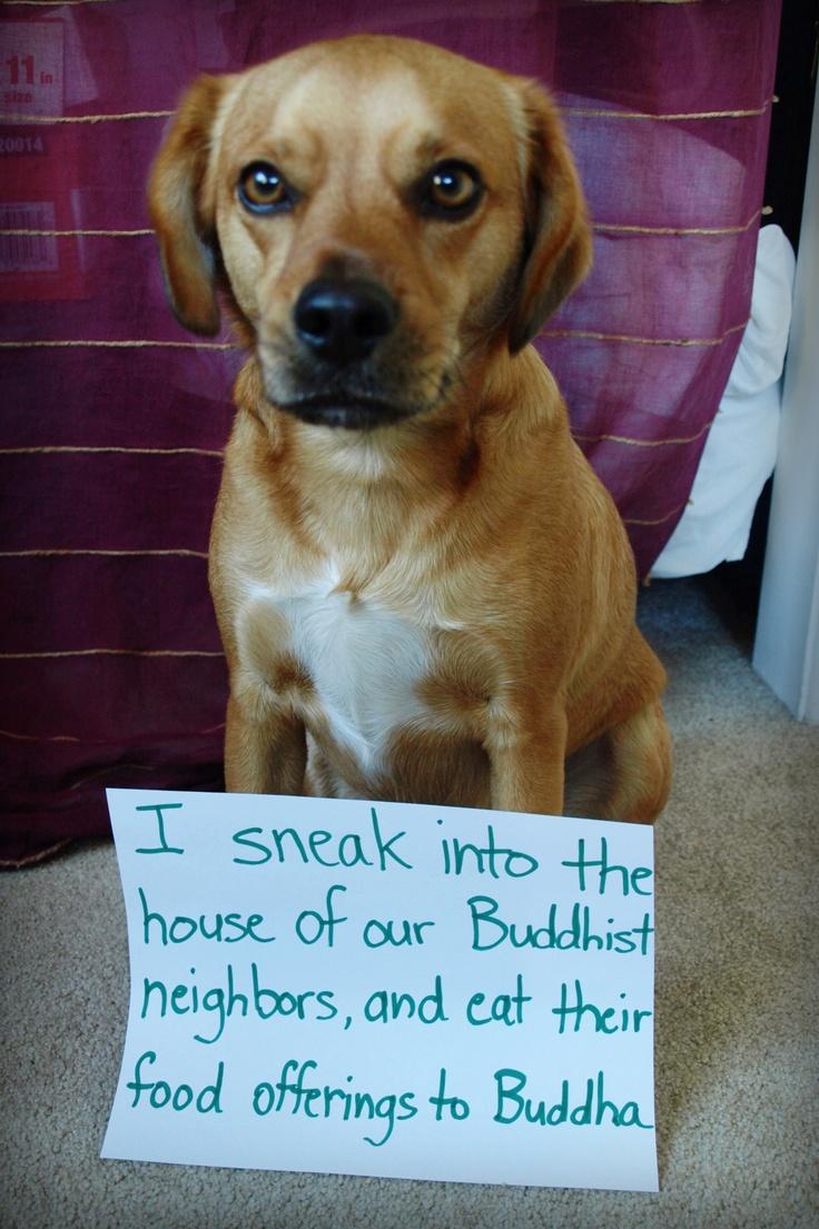 Sacrilegious Dog