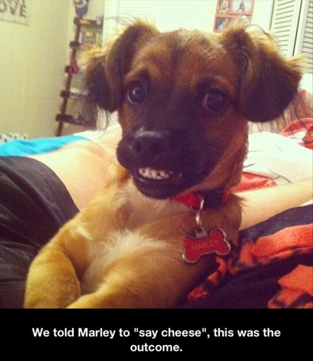 a-funny-pictures-dogs1