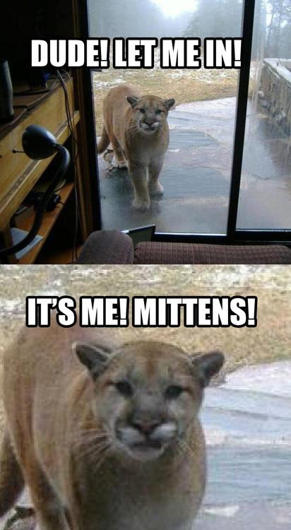 Mittens!